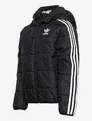 adidas Originals - PADDED JACKET - dunjakker & forede jakker - black/white - 5