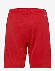adidas Performance - Team 19 Shorts - treningsshorts - powred/white - 1