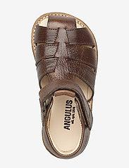 ANGULUS - Sandals - flat - closed toe -  - remsandaler - 2509 cognac - 2
