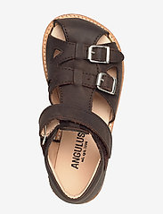 ANGULUS - Sandals - flat - sandals - 1660 dark brown - 3