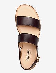ANGULUS - 5452 - flate sandaler - 1836 dark brown - 3