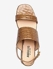ANGULUS - Sandals - Block heels - højhælede sandaler - 1671 tan krokodille - 3