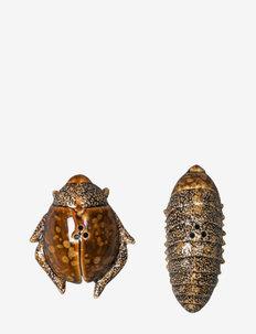 Salt & pepper Bug - maustemyllyt - brown