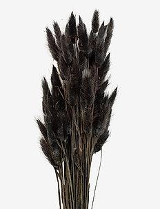 Dried  Flowers Lagurus Ash - interiør - black