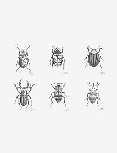 Day Poster Beetles, 6pcs sorted - interiør - white/ black