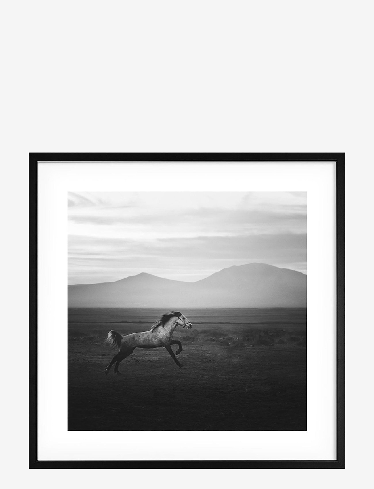 Democratic Gallery - Poster Wild Horse - home decor - black - 0