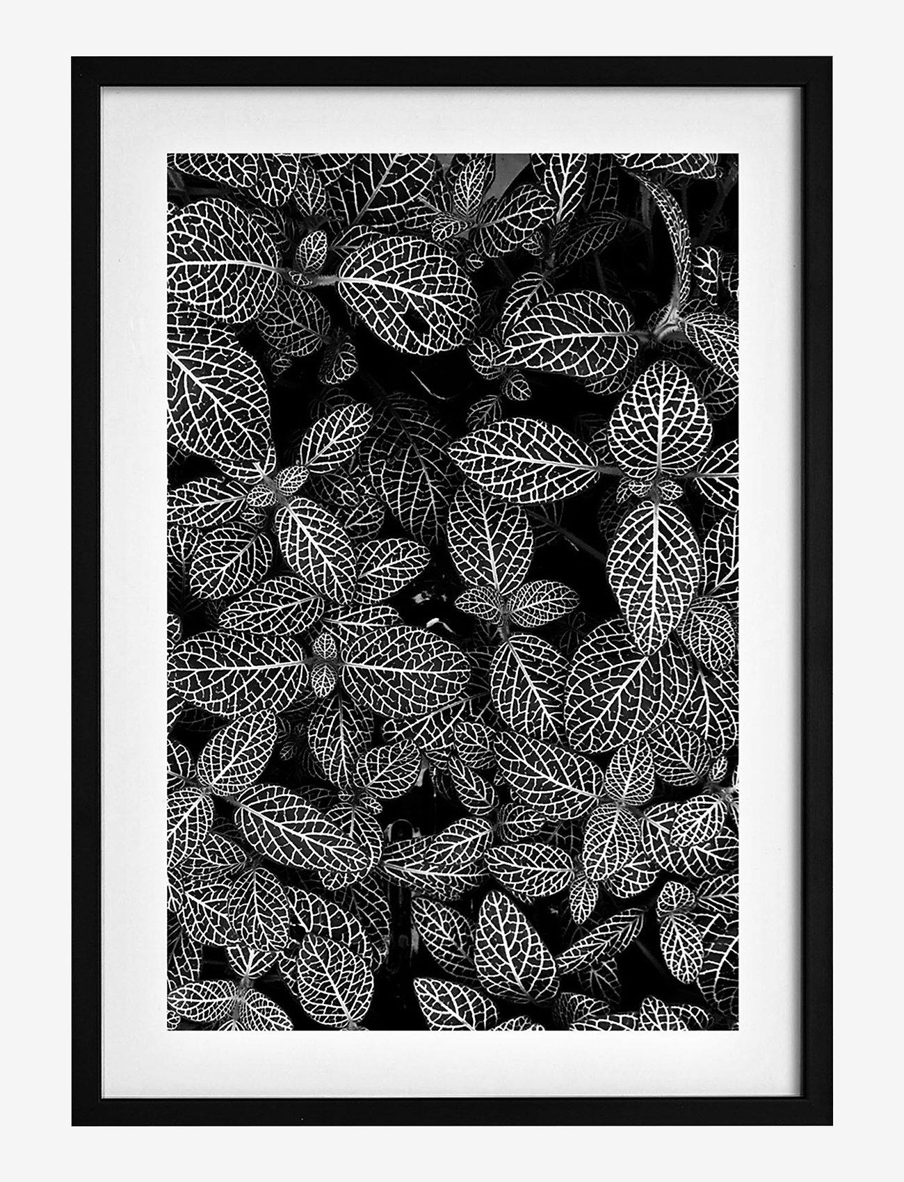 Democratic Gallery - Poster Abstract Plant - wystrój domu - black - 0