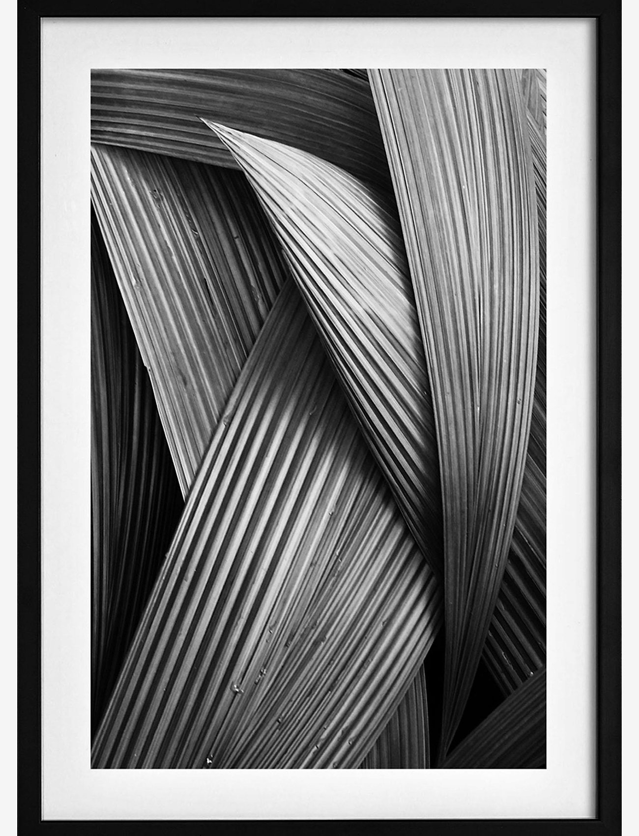 Democratic Gallery - Poster Abstract Palm Tree - home decor - black - 0