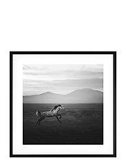 Poster Wild Horse - BLACK