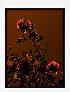 Poster Rose - wystrój domu - red