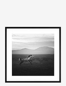 Poster Wild Horse - home decor - black