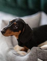Denjo Dogs - Nest Bed Gusto - hundesenge - light grey - 7