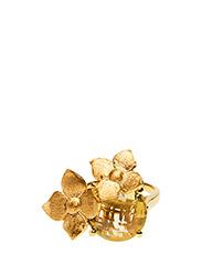 Buttercup - GOLD