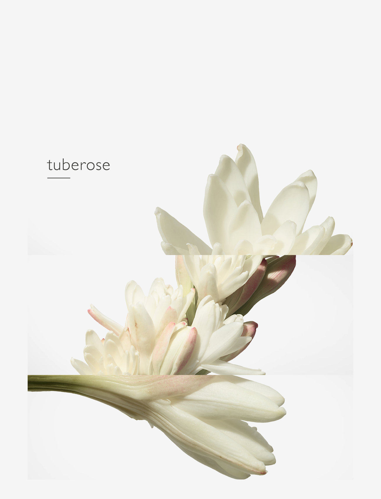 HERMÈS - Twilly d'Hermès, Eau de parfum - clear - 5