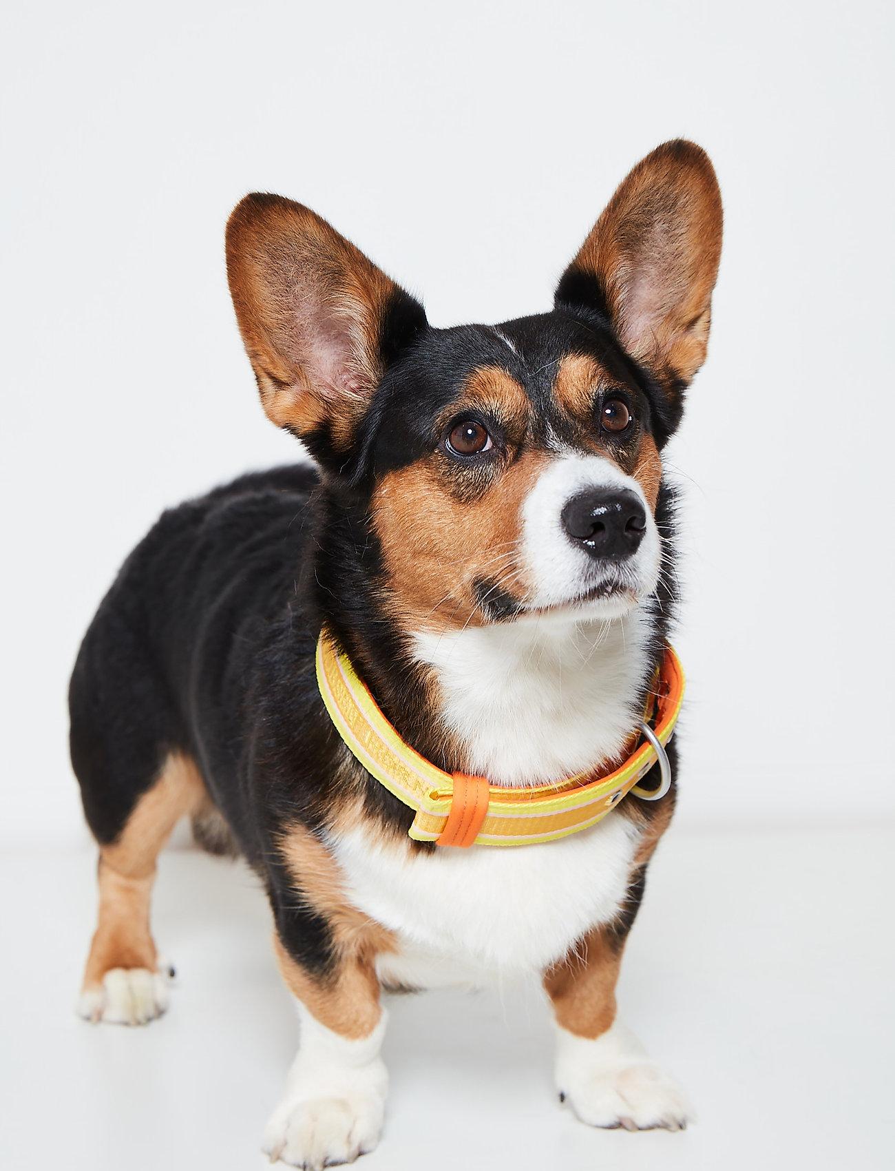 Ilse Jacobsen - Dog Collar - dog accessories - sunbeam - 0