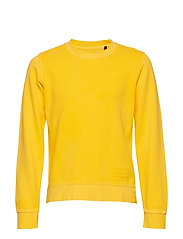 Sweatshirt 1/1 Arm - BUTTERCUP-YELLOW