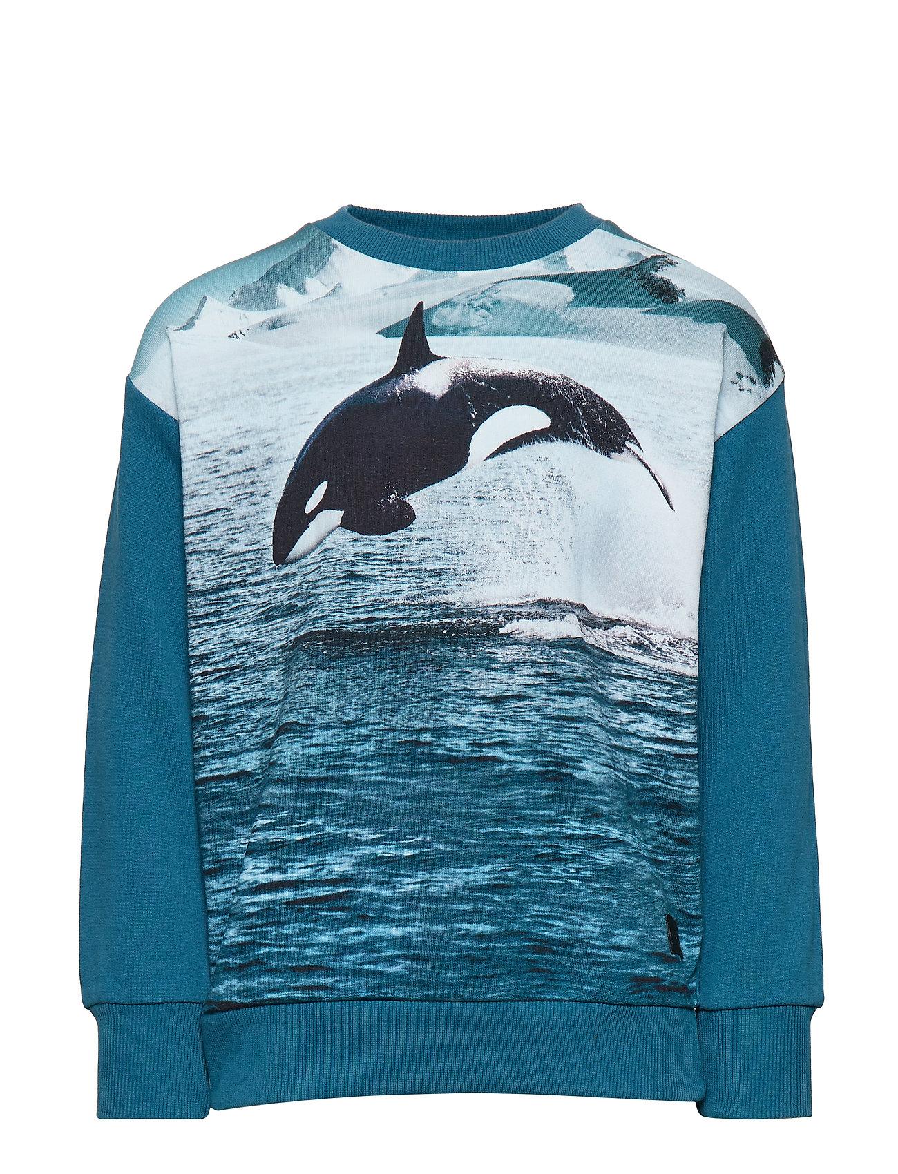 Molo Madsim - JUMPING ORCA