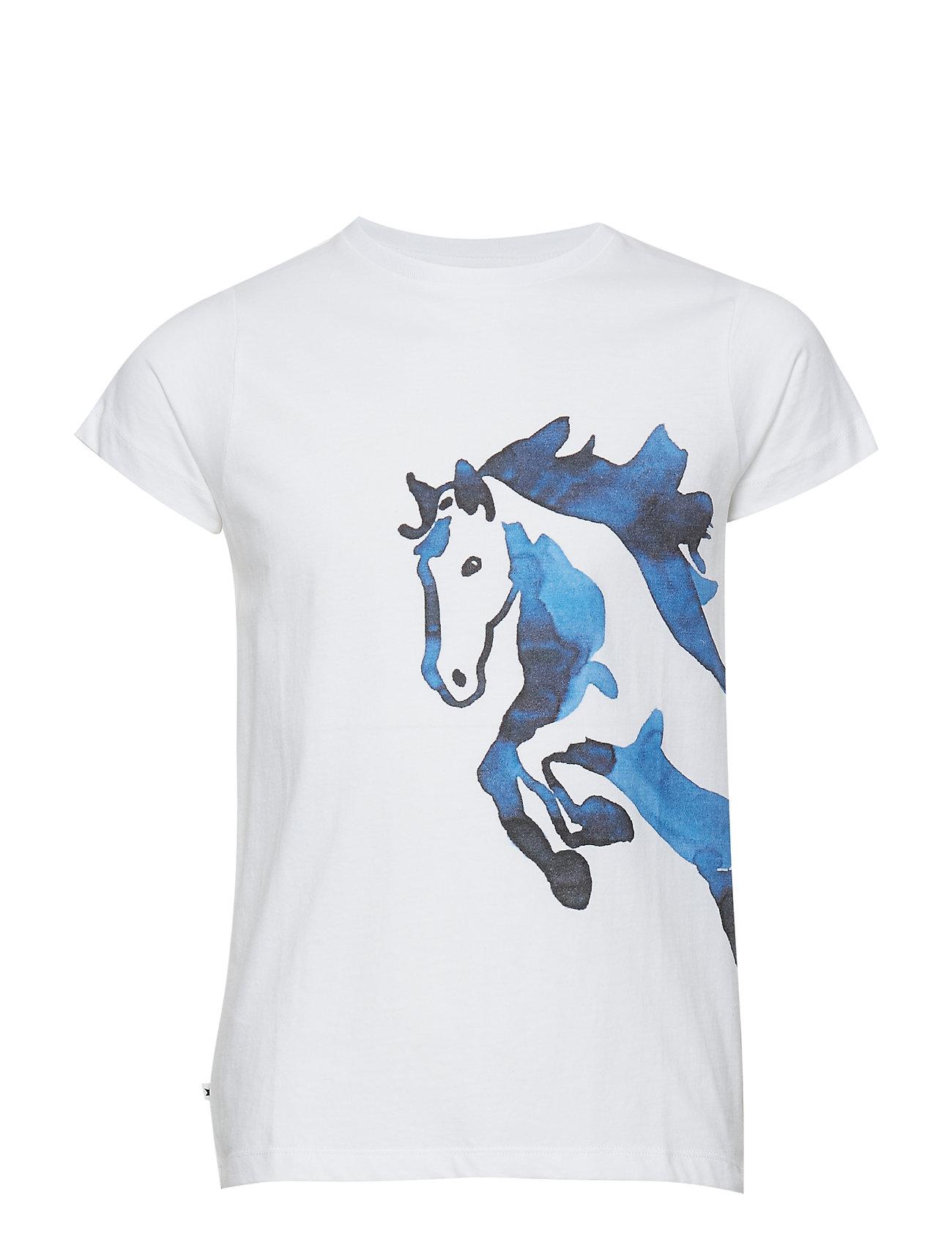 Molo Rusalka - WATER COLOUR HORSE