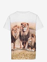 Molo - Road - kortærmede - 3 lions - 0