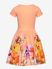 Molo - Cissa - sukienki - hummingbirds - 1