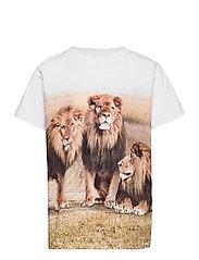 Road - 3 LIONS