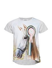 Risha - SHOW HORSE