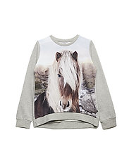 Marlee - ICELANDIC HORSE