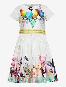 Candy - kjoler - ice ice birdie