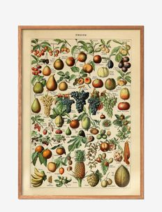 Fruits - affiches - multi-colored