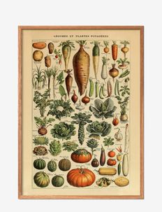 Legumes - affiches - multi-colored
