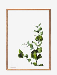 Eucalyptus 2 - affiches - multi-colored