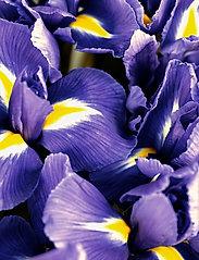 Ralph Lauren - Fragrance - Polo Blue Eau de Parfum 75 ml - eau de parfum - no color code - 5