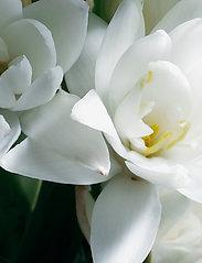 Ralph Lauren - Fragrance - Woman - parfyme - clear - 3