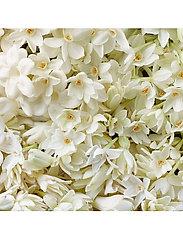 Ralph Lauren - Fragrance - Woman by Ralph Lauren Intense Eau de Parfum 30 ml - parfyme - no colour - 5